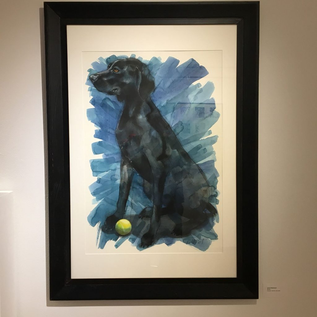 Charcoal colored lab dog on blue background